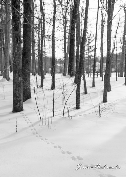 VA_Snow_ART_JOP-0016.jpg
