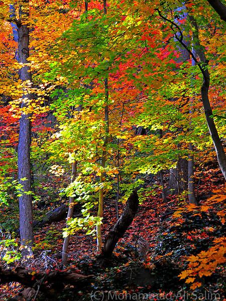 Fall Colors web.jpg