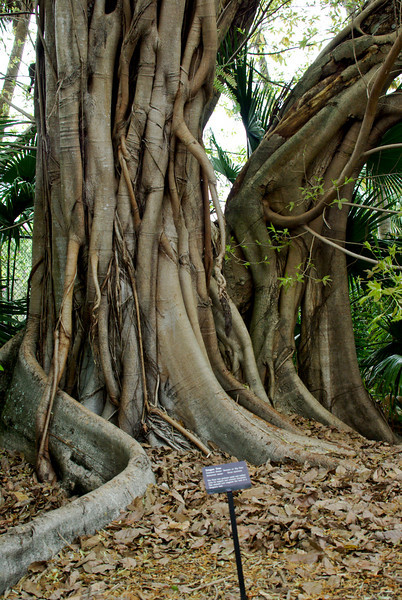 McKee Botanical Garden031020.jpg
