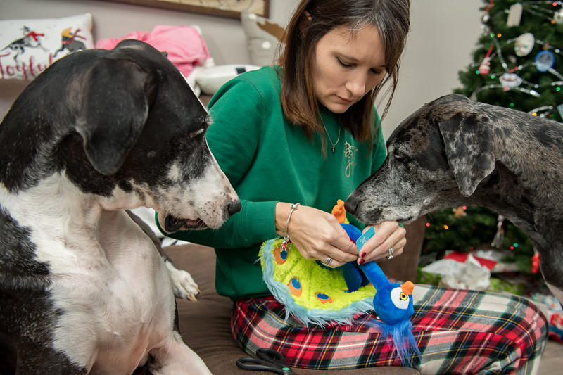 Doggy Christmas0014.jpg