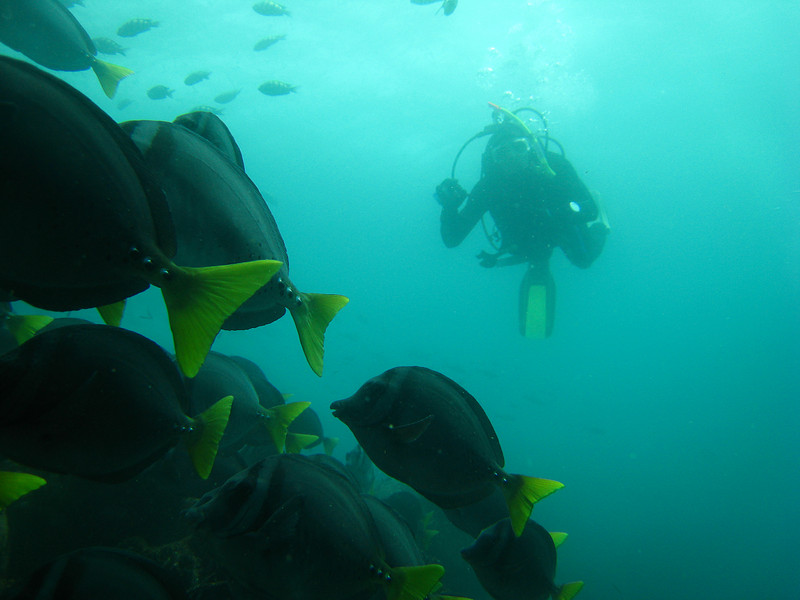 Diving in the Galapagos (96 of 392)