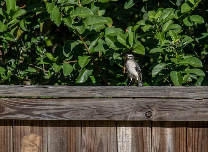 MMG_9349 BIRDS.jpg