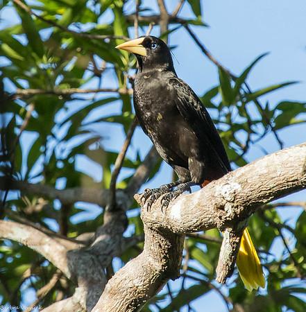 Pantanal BV 2014