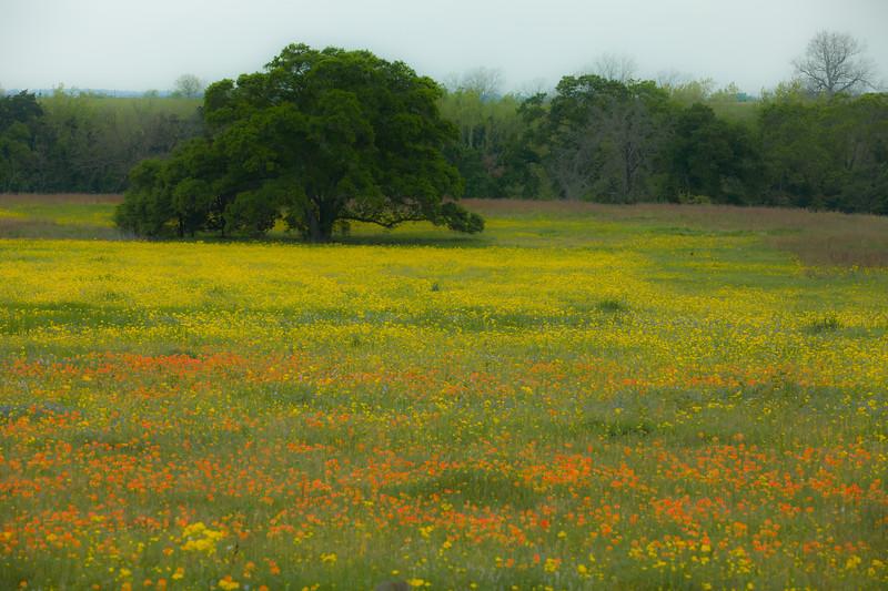 2015_4_3 Texas Wildflowers-7590.jpg