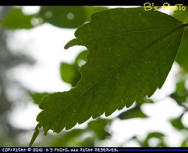 20100406 - Tsing Yi Natural Trail