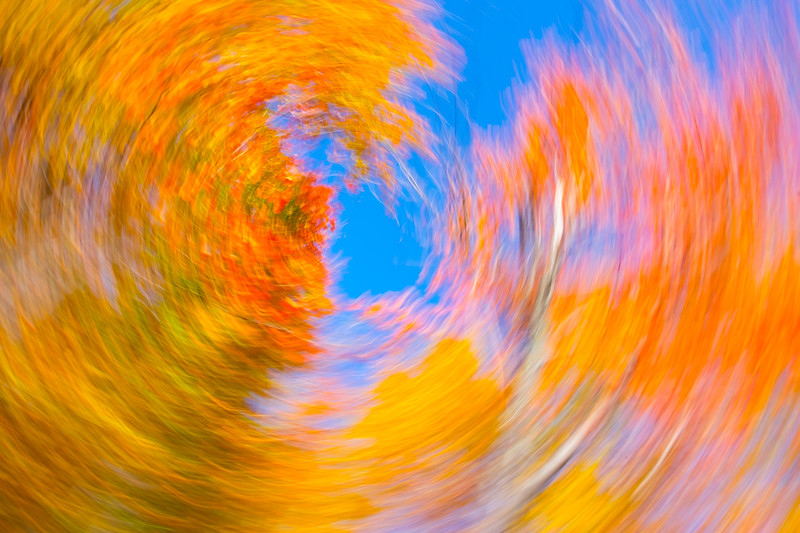 White Mountain Fall Abstract #2