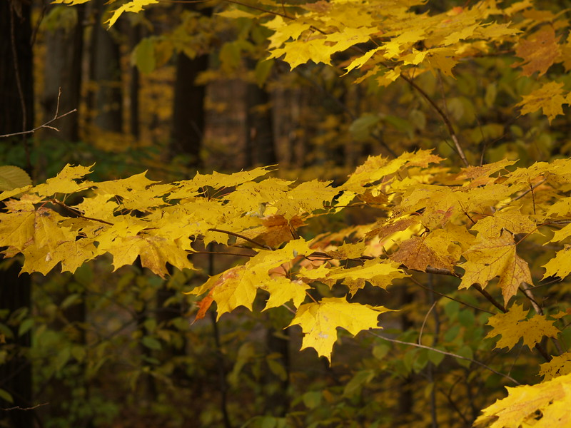 late fall color at Edison Woods