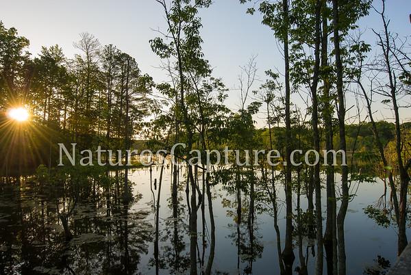 VA Tidewater Country