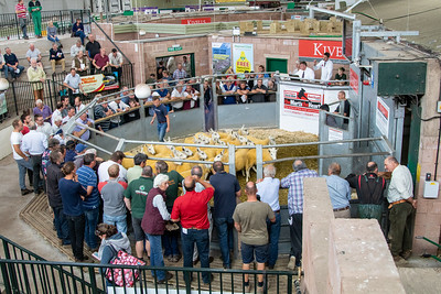 Exeter Summer Sheep Sale