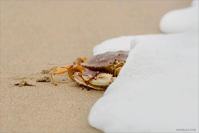 San Gregorio State Beach / San Gregorio / CA