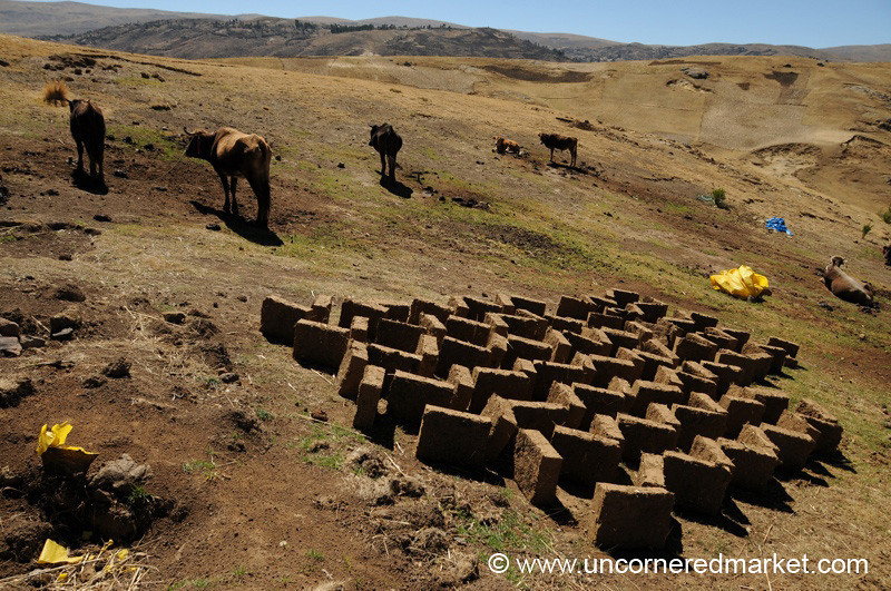 Bricks and Cows - Ucchus, Peru