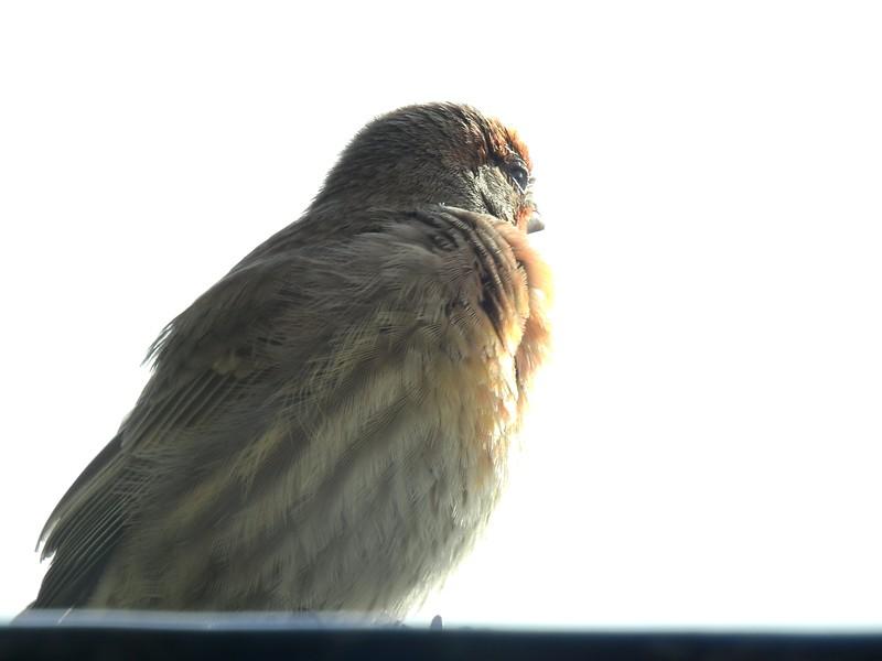 birds (131).JPG