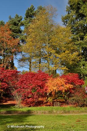 Autumn colour at Batsford Arboretum