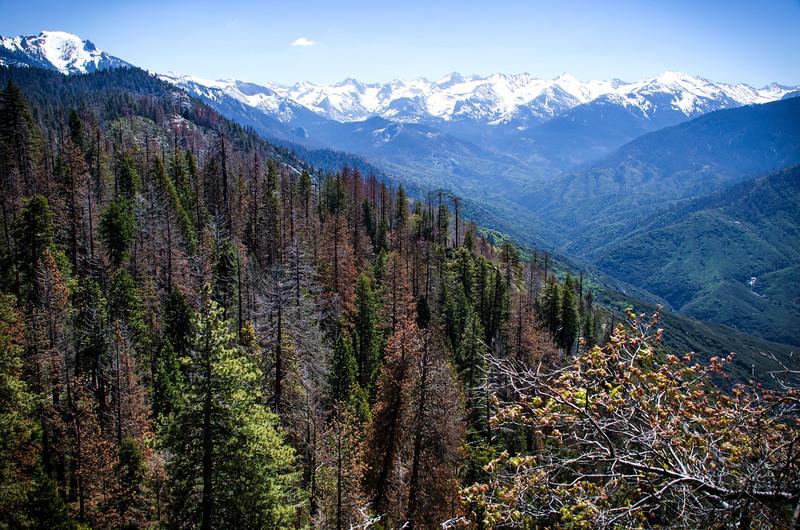 SequoiaHDR-12.jpg