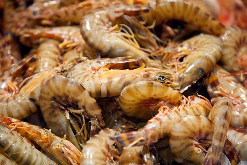 King prawns, Boqueria market, town of Barcelona, autonomous commnunity of Catalonia, northeastern Spain