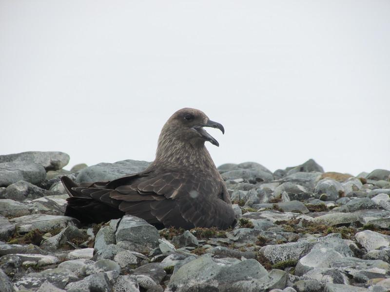 Antarctic wildlife - Jennifer Caputo