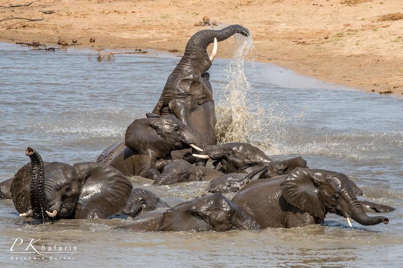 BW Bekker PKSafaris Elephants (2 of 4).jpg