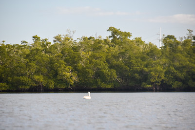 1230PM Heart of Rookery Bay Kayak Tour - Cahill