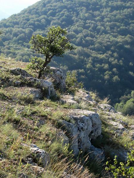 """burning bush"" on the mountain - Crimea - the ""Grand Canyon of Ukraine"""