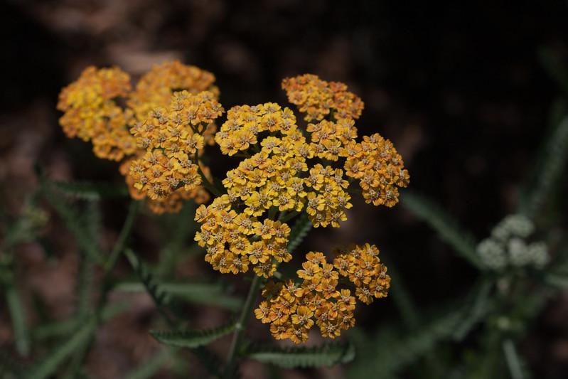 2009 06 30_NY Botanical Gardens_0675.jpg