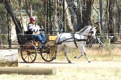 Longwood Carriage Driving, November 2008 - Gallery One