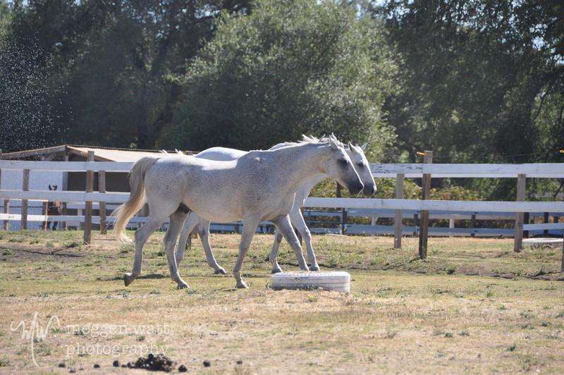 EB&Horses-134.jpg