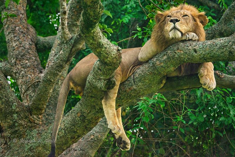 Uganda/Kenya Wildlife 2015