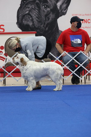 CSCA Regional Specialty Dogs - Puppy 9-12 Months