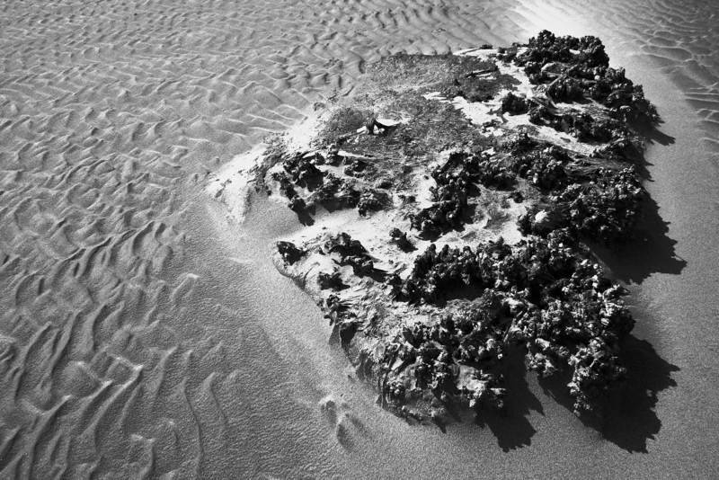 080705-046BW (Mussels, Barnacles, Seaweed, Kelp, Tideflats).jpg