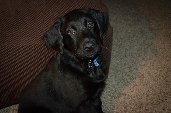 Odie at 12 weeks