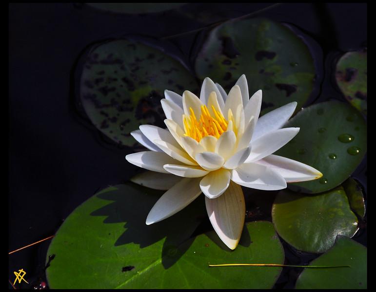 Flower 9.JPG
