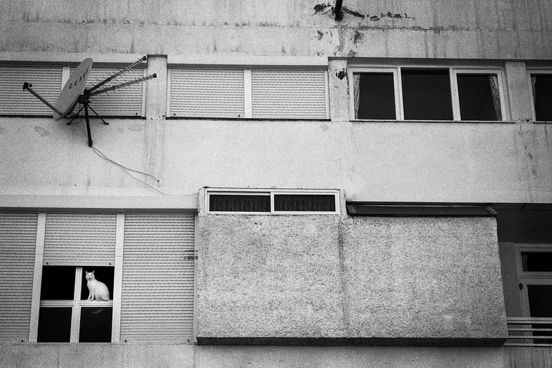 CAT_CHILLING_ON_WINDOW.jpg