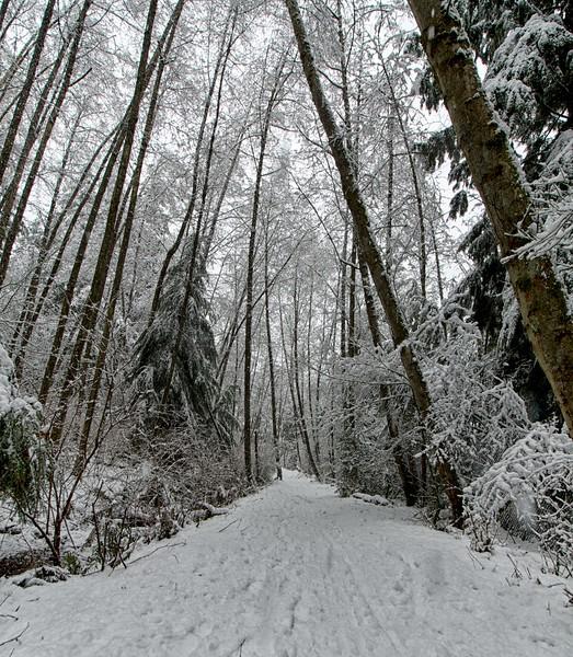 Snow day 1 235.jpg