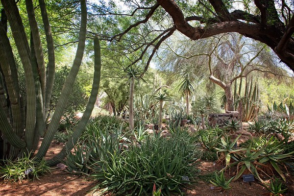 Phoenix Botanic Garden - 2019/05/28