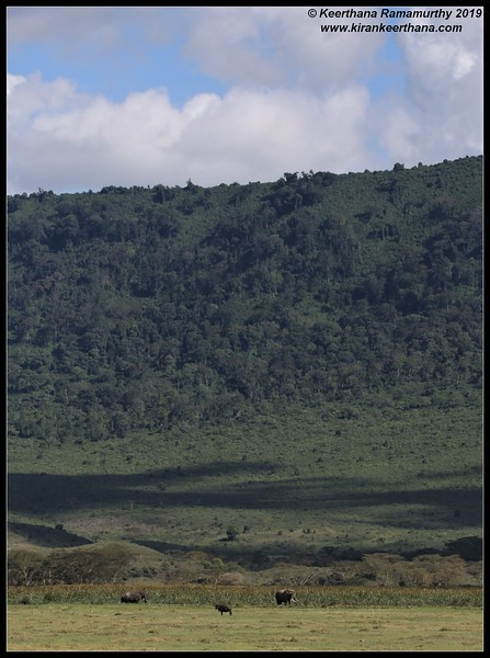 African Elephant scape, Ngorongoro Crater, Ngorongoro Conservation Area, Tanzania, November 2019