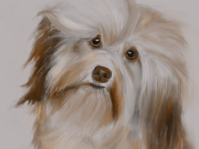 This video shows the stroke-by-stroke creation of the puppy dog painting in the portrait gallery.  The painting was done on an iPad mini with the Procreate app.
