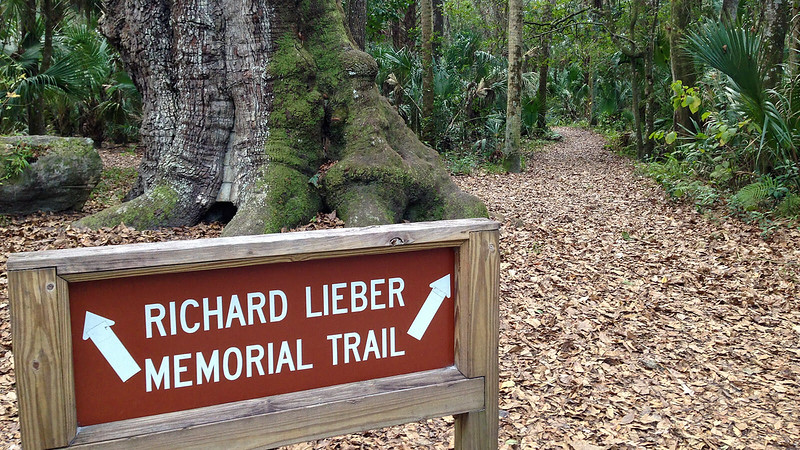 Trailhead sign in front of a large oak trunk