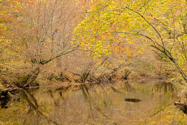 Duke-Forest-11-1-2015