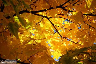 Atmospheric Autumn