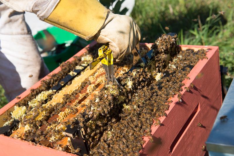 Bee Shoot_FB-158.jpg