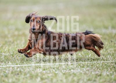 dachshund-ethan