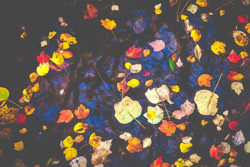 20151213-_MG_3560 filters-2.jpg