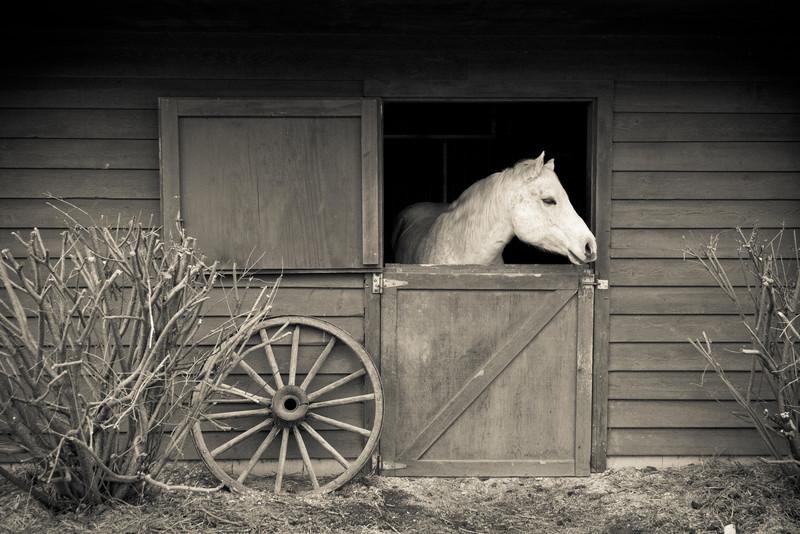 Dapple and Barn, Black and White