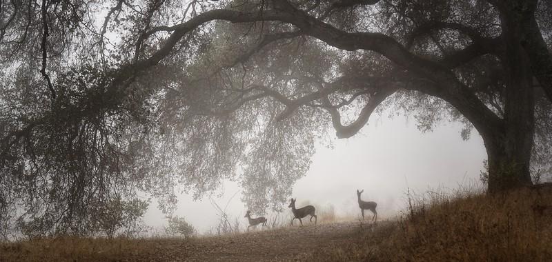 Deer, smoky air, and drought