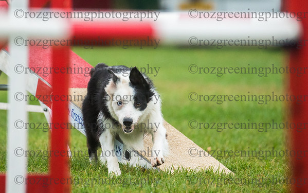 Bromsgrove Saturday Ring 3 Large Agility Combined 4-5