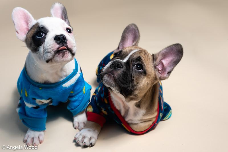 Puppies43.jpg