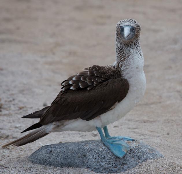 Galapagos_MG_4143.jpg