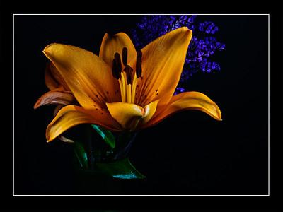Fresh Flowers_Part II