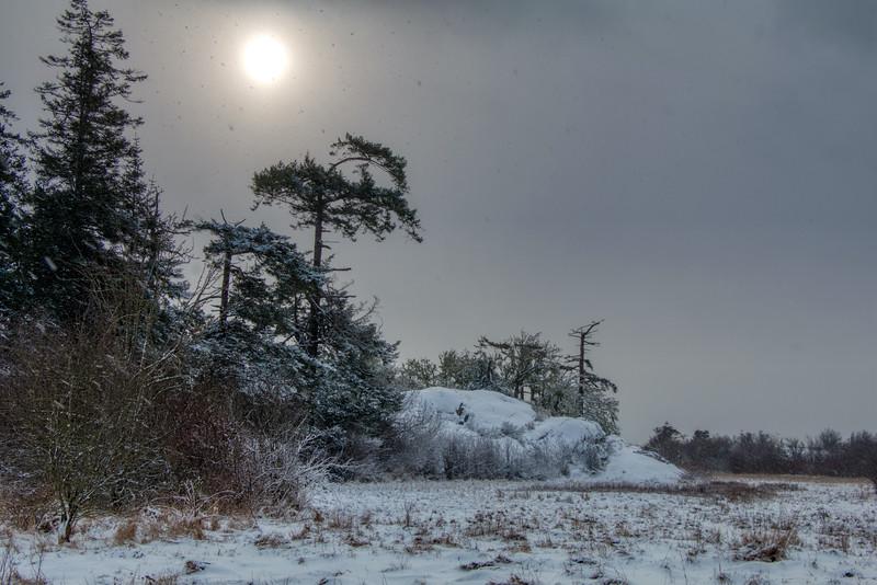 Island View Salt Marsh