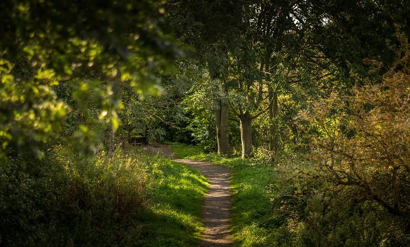 Forest Shadows-139.jpg